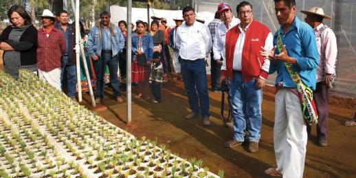 Chiapas en renovación integral del ambiente más allá de la reforestación con Coca-Cola FEMSA.
