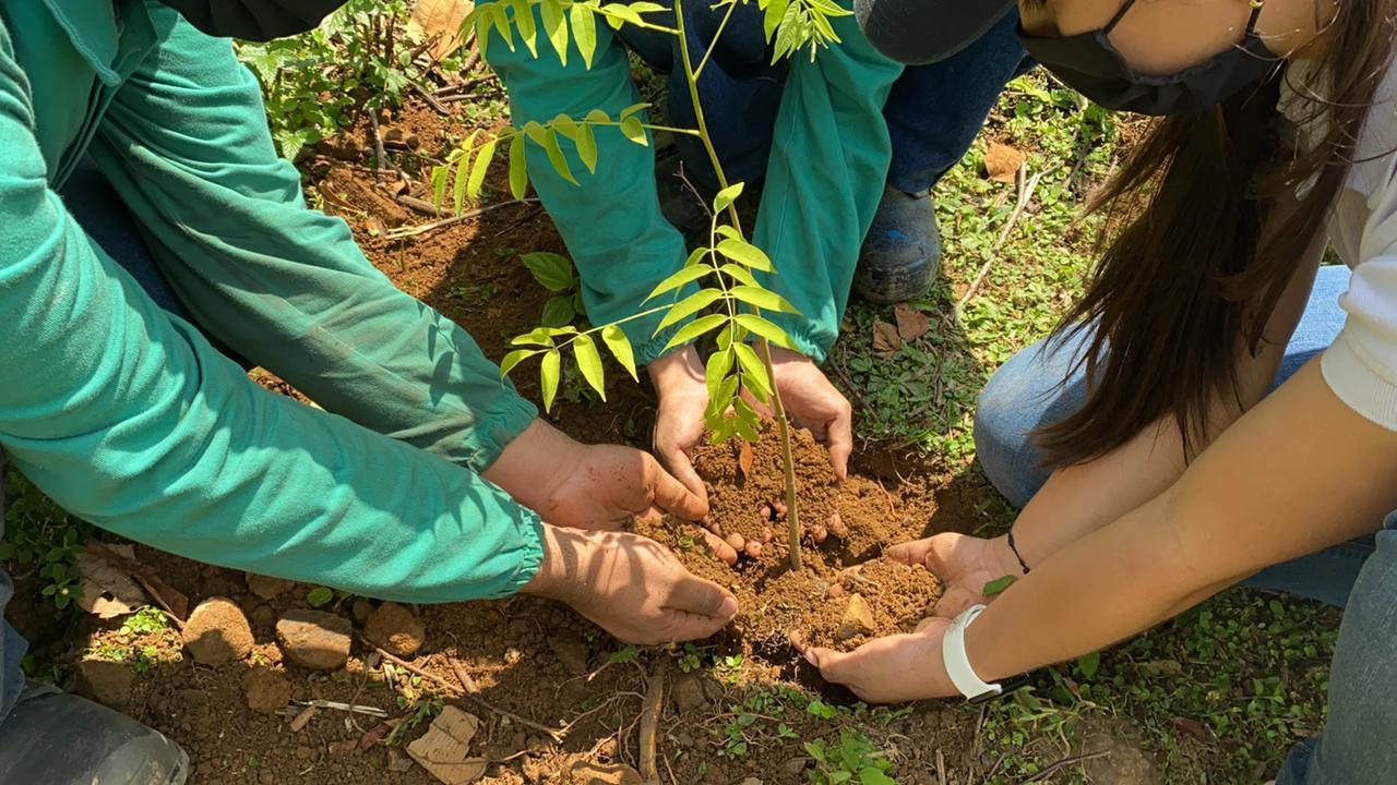 Coca-Cola FEMSA se suma a #MeUno Colombia para sembrar 5.000 árboles en la zona rural de Cali, Colombia.